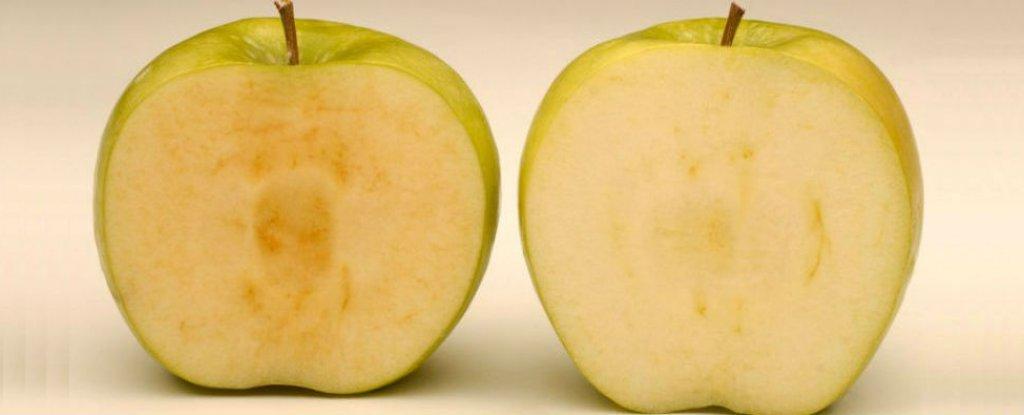 التفاح المُعدل وراثيًا لمُقاومة الصدأ، الآن في الأسواق الأمريكية!