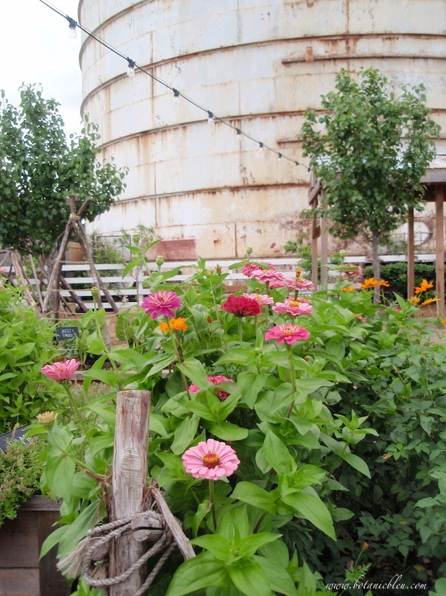 Magnolia Zinnia Plants Border Vegetable Garden Near Silos