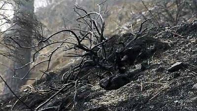 Estable el incendio reavivado en Gran Canaria