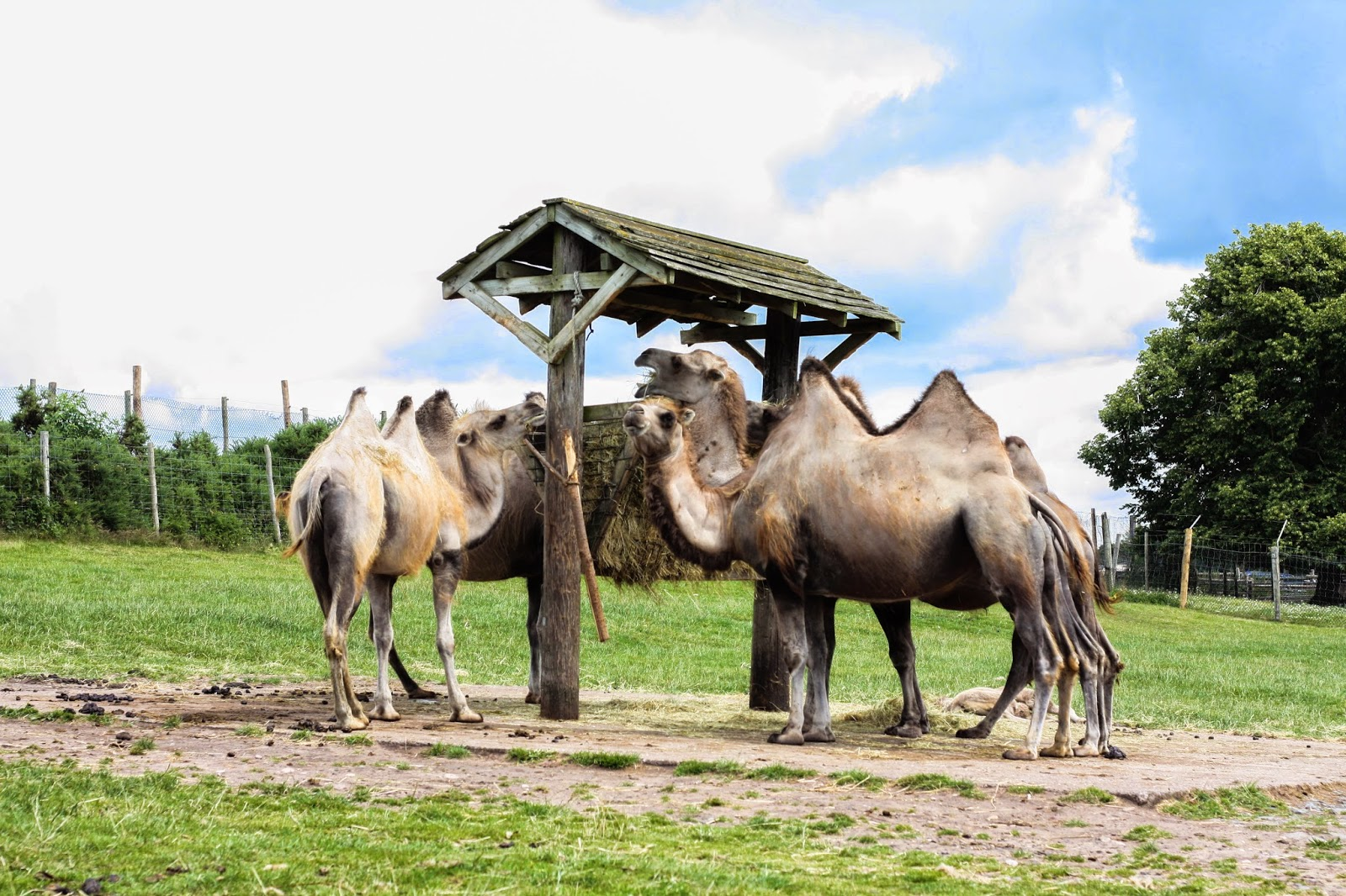 West Midlands Safari Park weekend break