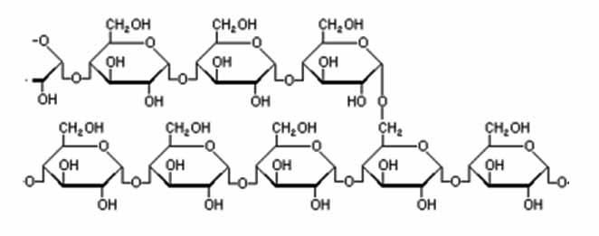 metabolismo biologia Mentalidad