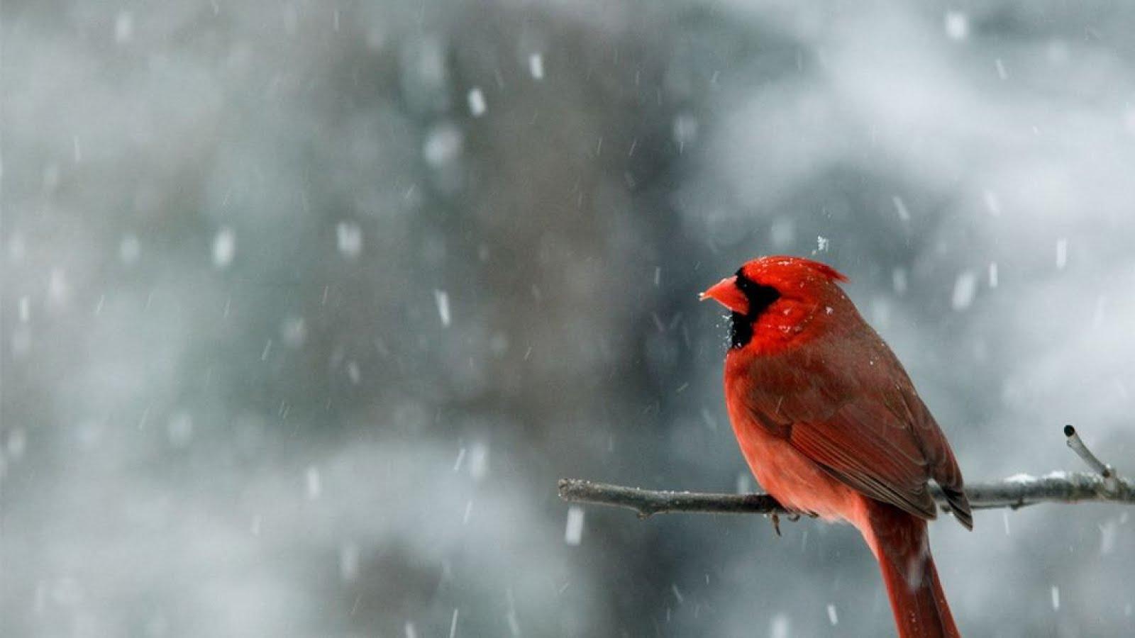 Falling Snow Wallpaper Widescreen