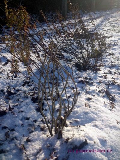 Kräuter-Garten im Winter
