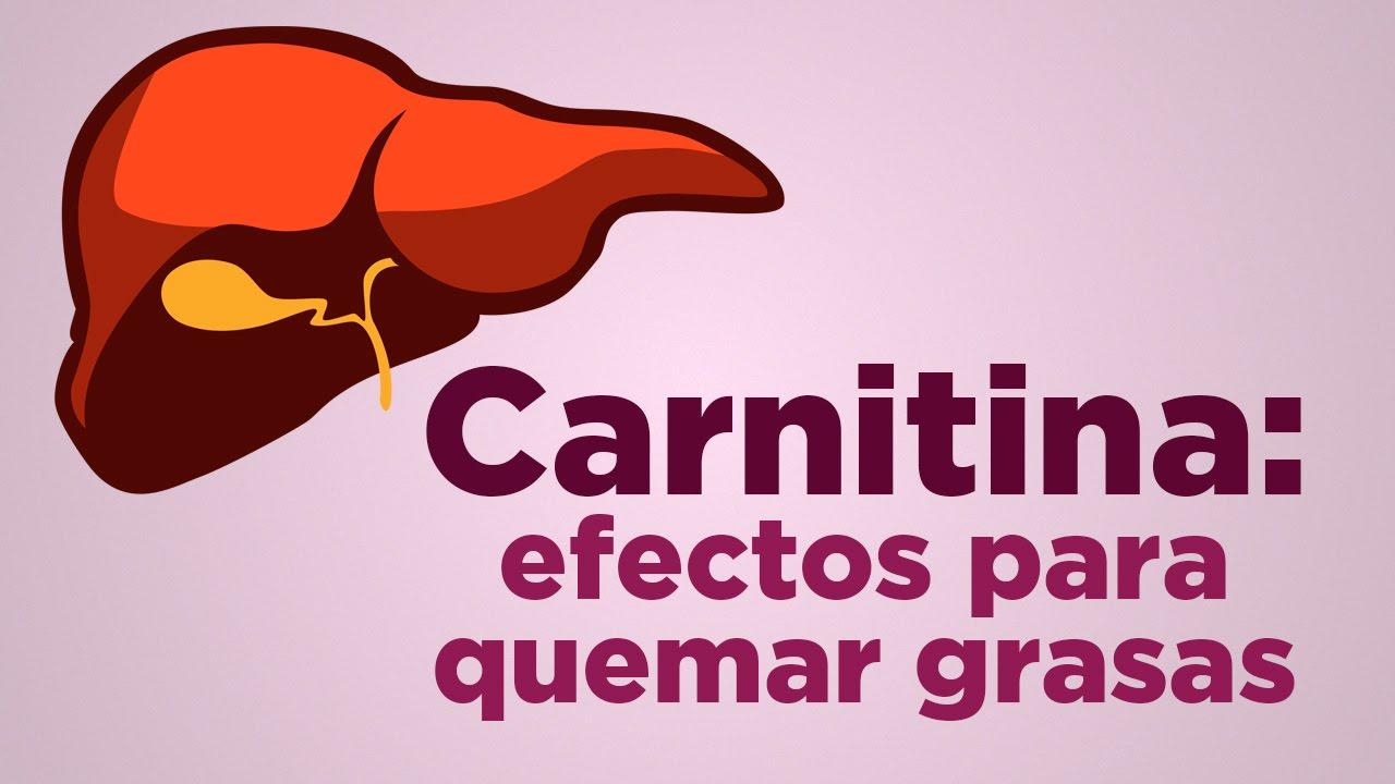 Carnitina y alcachofa efectos secundarios