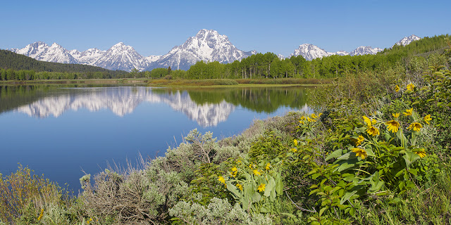 a perfect mirrored reflection of Mt. Moran with wildflowers from oxbow bend in grand teton national park