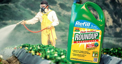 Agora que a Monsanto tem geneticamente modificado plantações para resistir a doses pesadas do produto químico