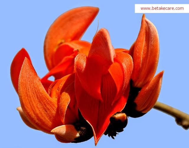 TESU flowers