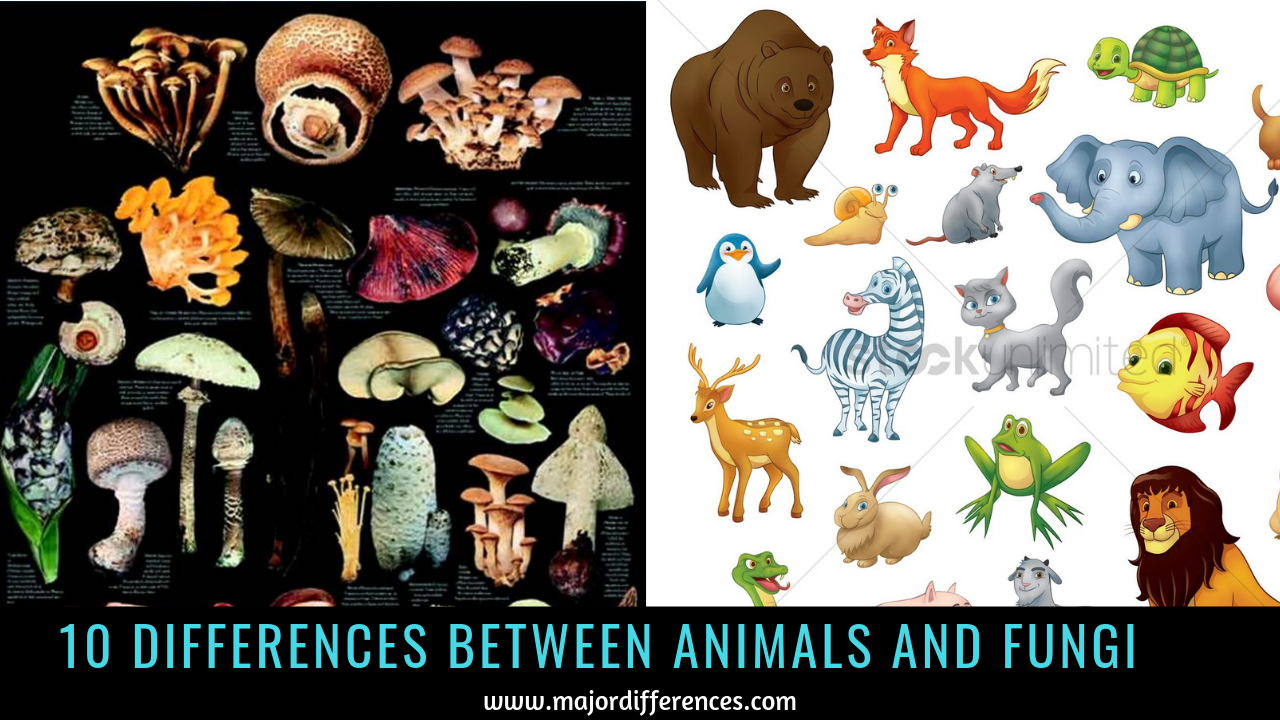 10 Differences between Fungi and Animals (Fungi vs Animals)