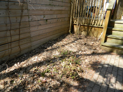 Riverdale Spring Cleanup Backyard Before by Paul Jung Gardening Services--a Toronto Organic Gardening Company