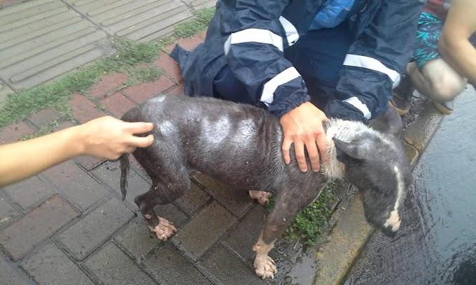 Agentes de Trânsito e Proteção Animal resgatam cão em Cachoeirinha