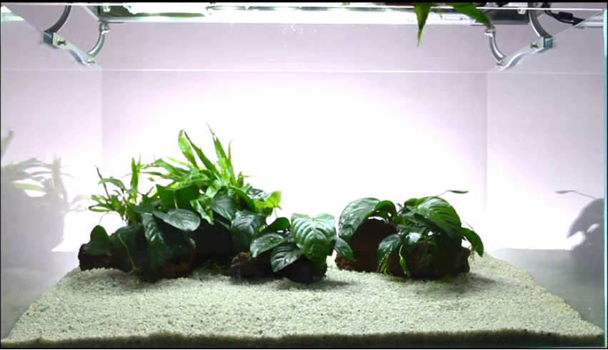 Tự làm hồ thủy sinh chơi ráy và dương xỉ - xong được 50%