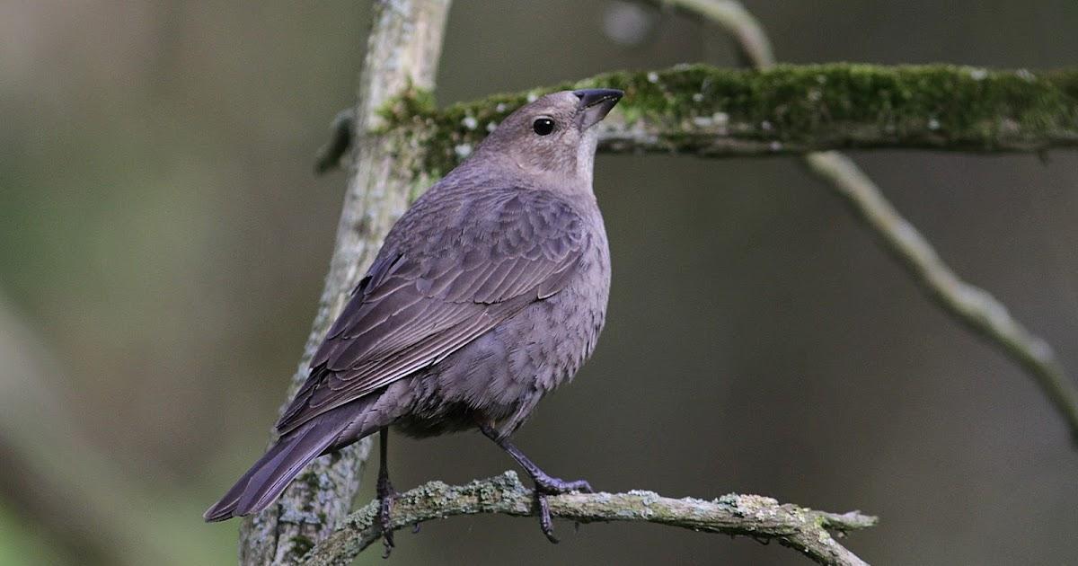 des oiseaux sur ma route une application pour apprendre reconna tre les oiseaux. Black Bedroom Furniture Sets. Home Design Ideas
