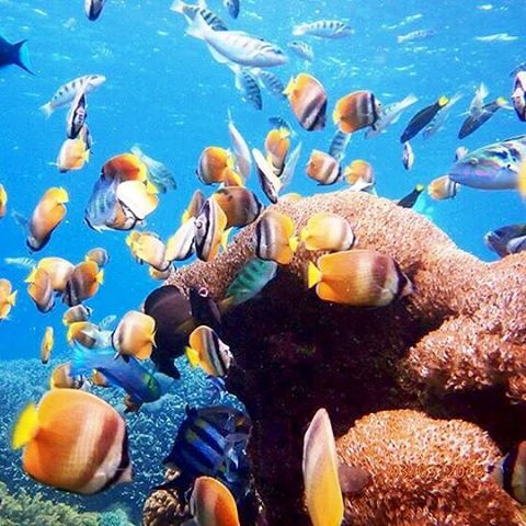 9 Things To Do in Bali - Snorkeling