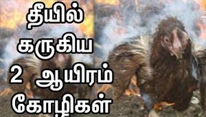 2000 chicken burnt to death in Villupuram fire accident