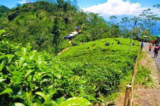 Jalan Menuju Puncak Gunung Kukusan (kebun teh)