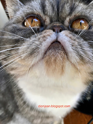 Popoki the cat in an extreme closeup
