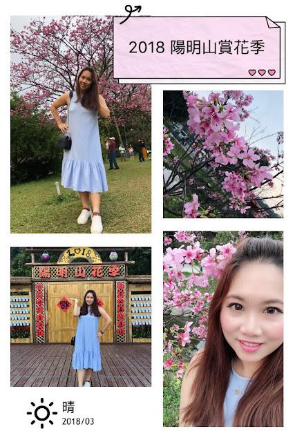 2018陽明山花季 賞櫻花沉醉在粉紅色的花海中
