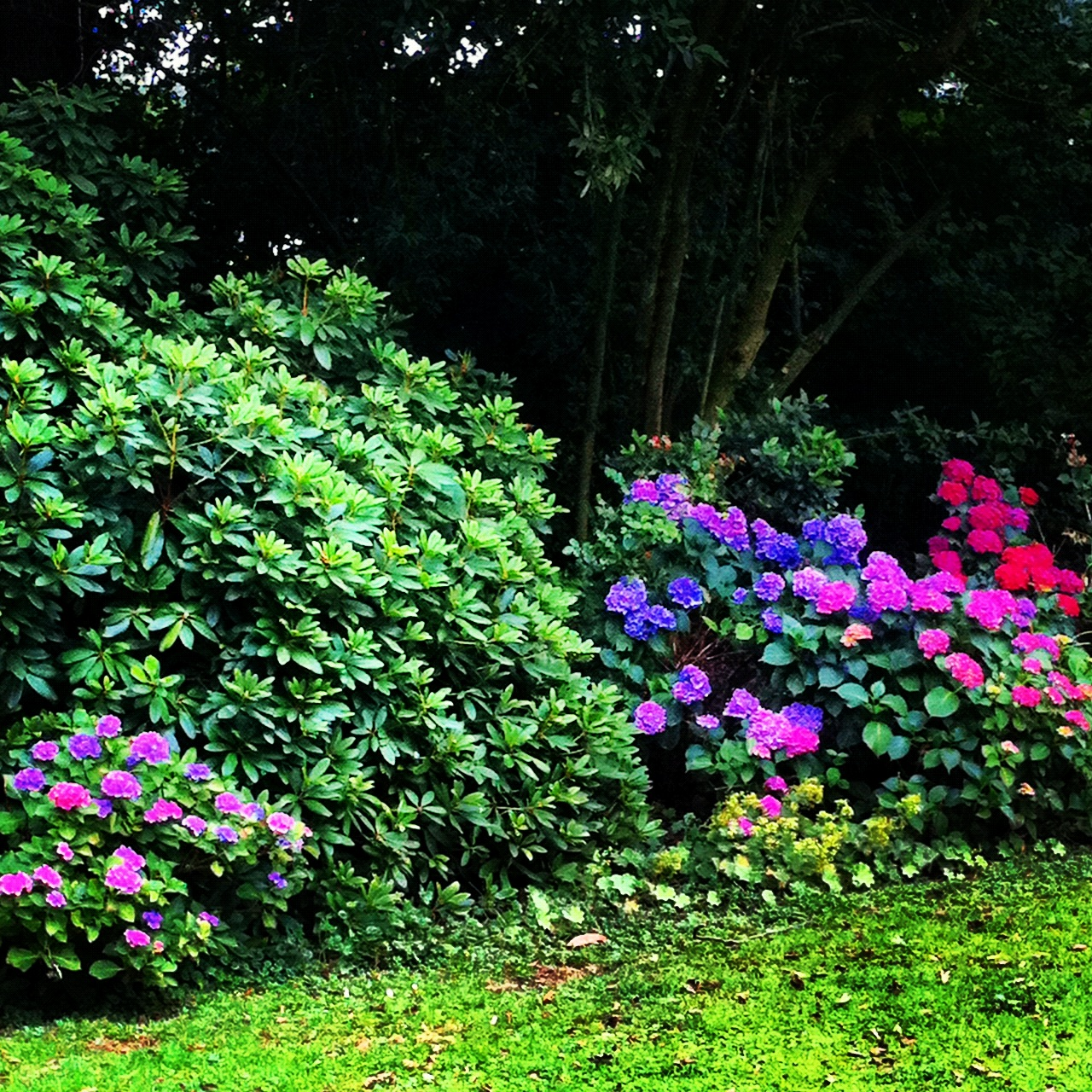 My Secret Garden: My Secret Little Garden