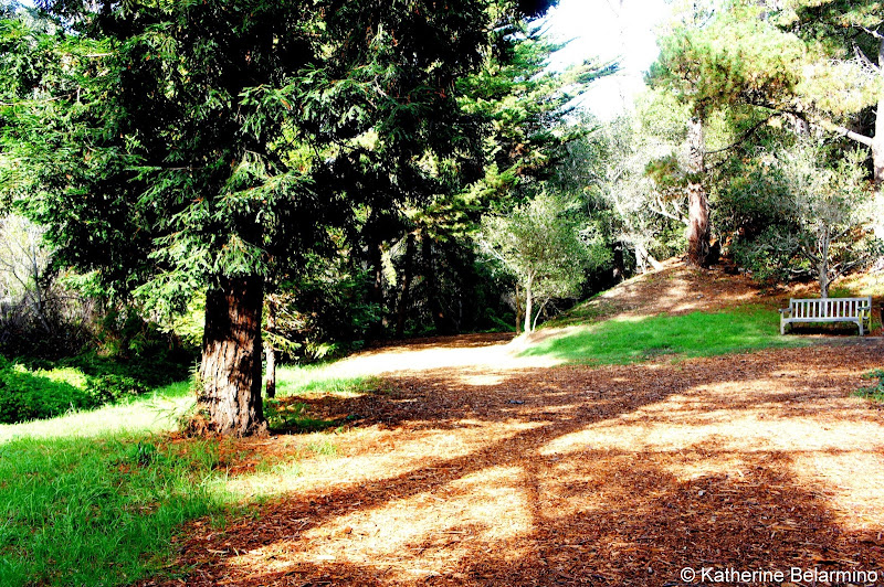 Mission Trail Park Carmel-by-the-Sea Weekend Getaway