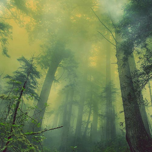 Fog of War Wallpaper Engine