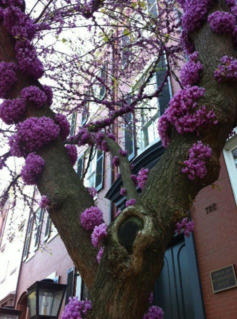 Linda Edkins Wyatt Southern Rosebud Tree