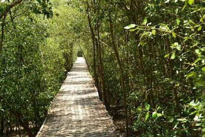 Wisata Hutan Mangrove