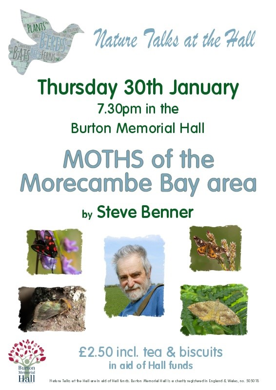 Moths of Morecambe Bay
