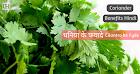 Cilantro (Dhaniya) Ke Fyade - Coriander Benefits in Health Hindi me