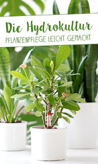 http://www.aentschiesblog.com/2017/02/die-hydrokultur-pflanzenpflege-leicht.html