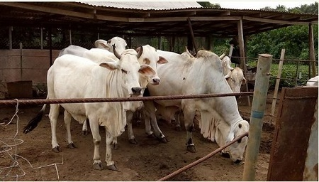 Economy Diversification Begins: Eagle Farms and Cattle Ranch in Anambra in Pictures