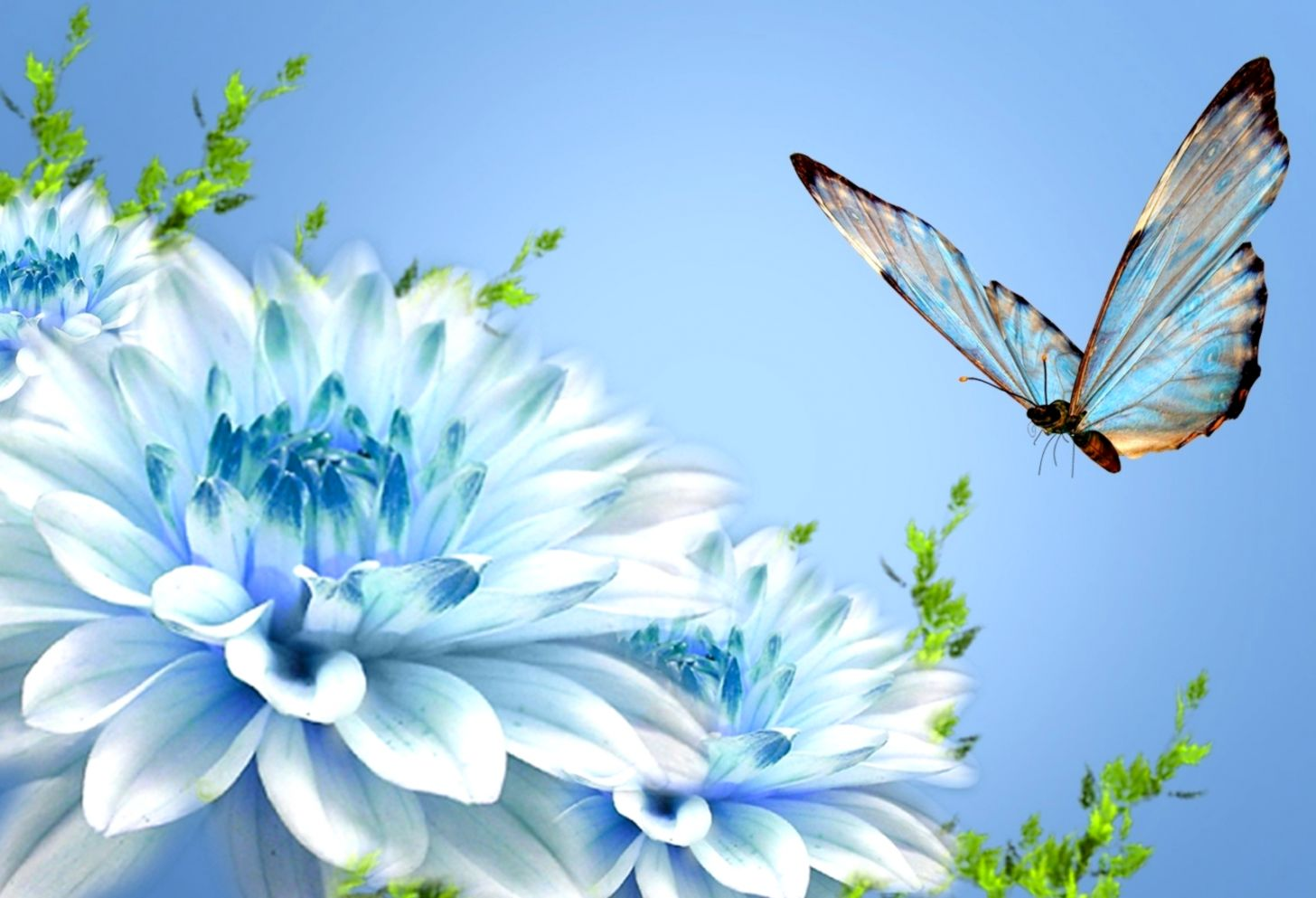 Butterfly Beauty Latest Hd Wallpapers Free Download List
