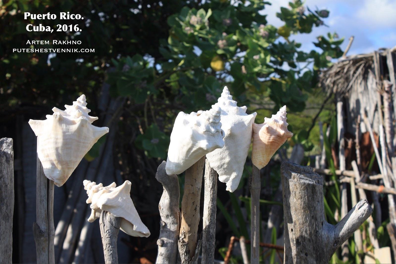 Морские раковины на ограде в кубинской деревне