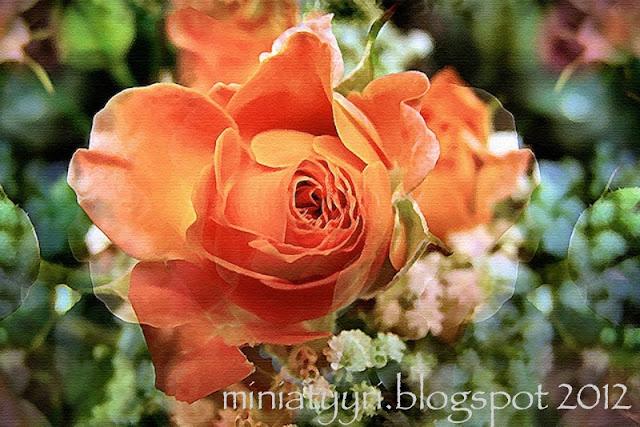 Ruusunoranssi / Roseorange