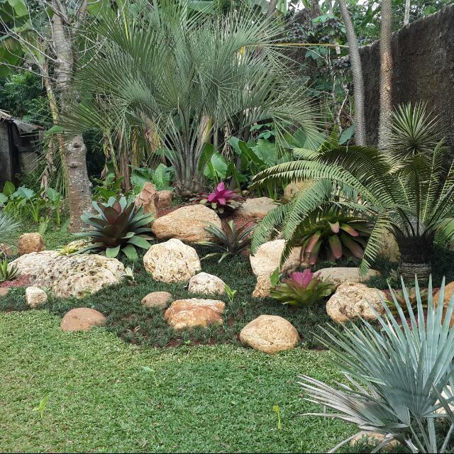 Jasa Pembuatan Taman Jual Rumput Taman Dan Tanaman Hias