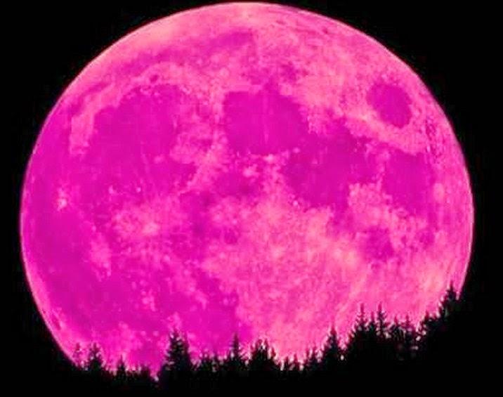 The Following Excerpt Is From Farmer S Almanac Full Pink Moon