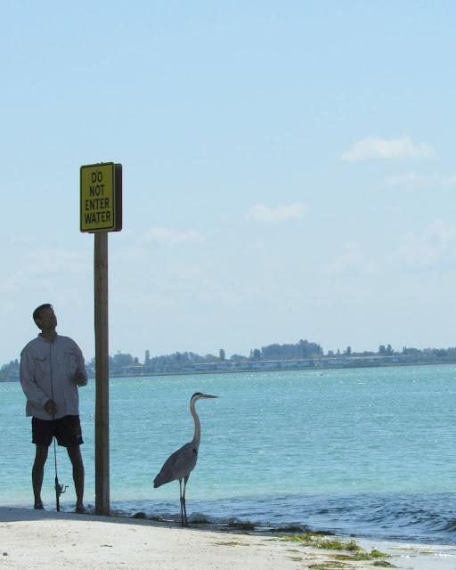Fishing with a Blue Heron in Sarasota Florida by Beth Ann Strub