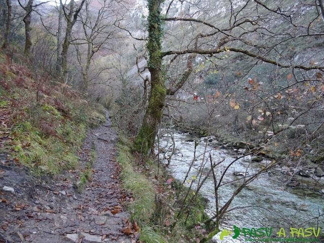 Sendero entre el bosque y el Río Dobra en la ruta de la Olla de San Vicente