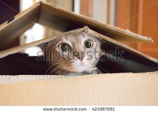 Kitten Play Hide and seek