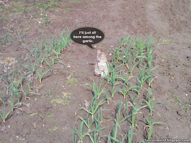 The Cat Among the Garlic