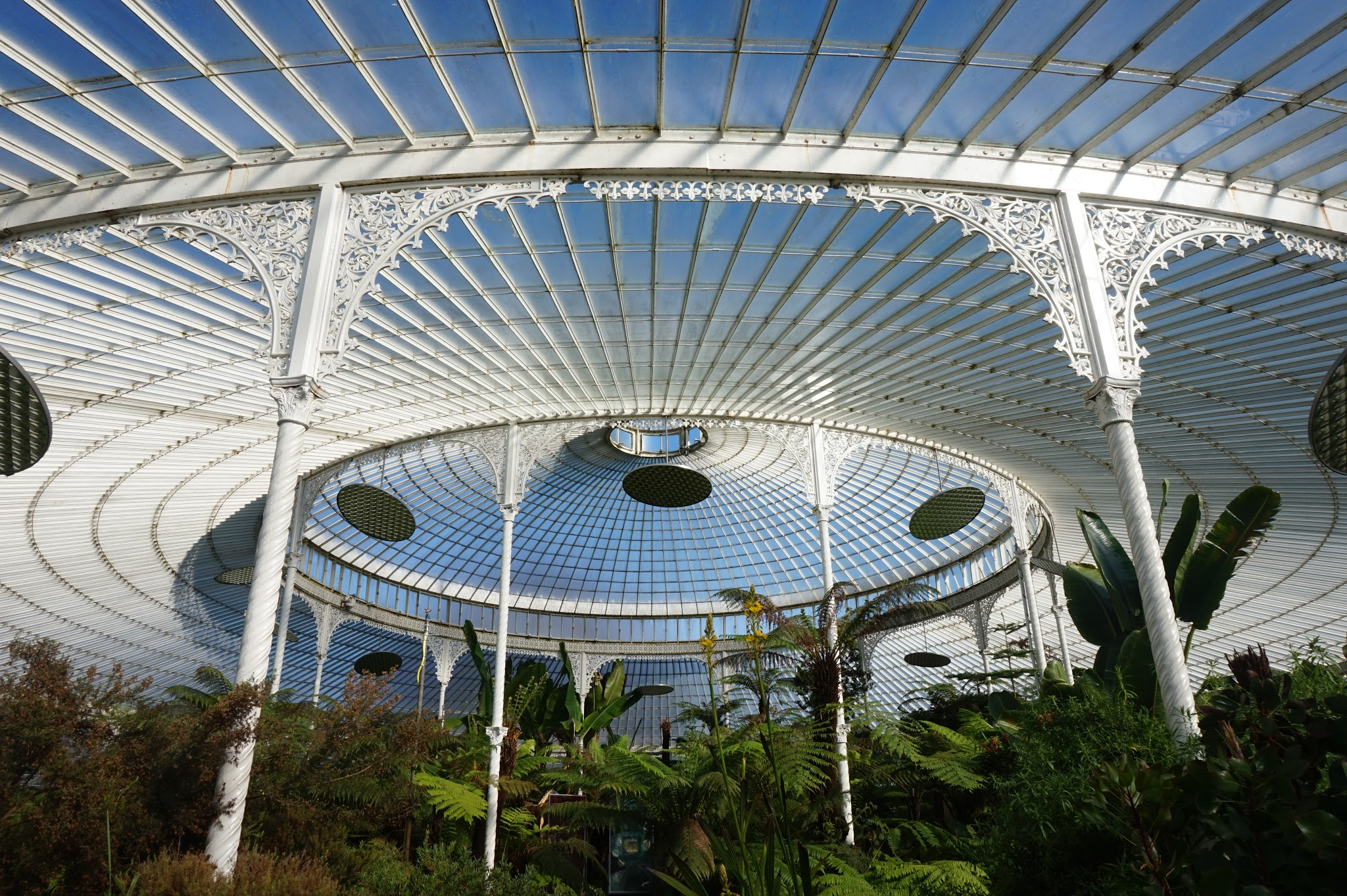ceiling of huge botanical greenhouse