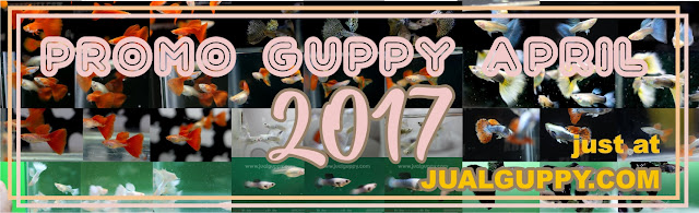 Jual Promo Guppy April,  Harga Promo Guppy April,  Toko Promo Guppy April,  Diskon Promo Guppy April,  Beli Promo Guppy April,  Review Promo Guppy April,  Promo Promo Guppy April,  Spesifikasi Promo Guppy April,  Promo Guppy April Murah,  Promo Guppy April Asli,  Promo Guppy April Original,  Promo Guppy April Jakarta,  Jenis Promo Guppy April,  Budidaya Promo Guppy April,  Peternak Promo Guppy April,  Cara Merawat Promo Guppy April,  Tips Merawat Promo Guppy April,  Bagaimana cara merawat Promo Guppy April,  Bagaimana mengobati Promo Guppy April,  Ciri-Ciri Hamil Promo Guppy April,  Kandang Promo Guppy April,  Ternak Promo Guppy April,  Makanan Promo Guppy April,  guppy breeding Promo Guppy April,  guppies for sale Promo Guppy April,  guppy care Promo Guppy April,  breeding guppies Promo Guppy April,  male guppies Promo Guppy April,  female guppies Promo Guppy April,  guppy aquarium Promo Guppy April,  baby guppies Promo Guppy April,  poecilia reticulata Promo Guppy April,  guppy tank Promo Guppy April,  guppy fry Promo Guppy April,  guppy giving birth Promo Guppy April,  how long do guppies live Promo Guppy April,  guppys Promo Guppy April,  guppy guppy Promo Guppy April,  guppy food Promo Guppy April,  guppy breeding tank Promo Guppy April,  fantail guppy Promo Guppy April,  guppy breeds Promo Guppy April,  guppy s Promo Guppy April,  wild guppies Promo Guppy April,  guppy babies Promo Guppy April,  guppy varieties Promo Guppy April,  freshwater guppies Promo Guppy April,  guppy female Promo Guppy April,  tropical guppies Promo Guppy April,  female guppies for sale Promo Guppy April,  guppy price Promo Guppy April,  raising guppies Promo Guppy April,  guppies for sale online Promo Guppy April,  guppy info Promo Guppy April,  buy guppies online Promo Guppy April,  guppy sale Promo Guppy April,  buy guppies Promo Guppy April,  guppy diseases Promo Guppy April,  guppies online Promo Guppy April,  caring for guppies Promo Guppy April,  best food for guppies Promo Guppy April,  food for guppies Promo Guppy April,  blue guppy Promo Guppy April,  guppy breeding setup Promo Guppy April,  guppy birth Promo Guppy April,  guppy species Promo Guppy April,  gestation period for guppies Promo Guppy April,  guppys online Promo Guppy April,  guppy care sheet Promo Guppy April,  guppy blue Promo Guppy April,  keeping guppies Promo Guppy April,  guppies for sale cheap Promo Guppy April,  the guppy Promo Guppy April,  guppy breeding cycle Promo Guppy April,  show guppies Promo Guppy April,  thai guppy Promo Guppy April,  male and female guppies Promo Guppy April,  what to feed baby guppies Promo Guppy April,  yellow guppy Promo Guppy April,  guppy names Promo Guppy April,  guppy gestation period Promo Guppy April,  feeding guppies Promo Guppy April,  guppy genetics Promo Guppy April,  guppy show Promo Guppy April,  turquoise guppy Promo Guppy April,  guppy fry care Promo Guppy April,  guppy games Promo Guppy April,  guppy gestation Promo Guppy April,  guppy colors Promo Guppy April,  guppy tank setup Promo Guppy April,  trinidadian guppies Promo Guppy April,  guppies having babies Promo Guppy April,  guppy strains Promo Guppy April,  what do guppies eat Promo Guppy April,  what to feed guppies Promo Guppy April,  guppy life span Promo Guppy April,  how to care for guppies Promo Guppy April,  guppy male and female Promo Guppy April,  what is a guppy Promo Guppy April,  guppy natural habitat Promo Guppy April,  german guppy Promo Guppy April,  guppy poecilia reticulata Promo Guppy April,  guppy images Promo Guppy April,  images of guppies Promo Guppy April,  fishguppy Promo Guppy April,  guppy facts Promo Guppy April,  how many babies do guppies have Promo Guppy April,  how big do guppies get Promo Guppy April,  how to take care of guppies Promo Guppy April,  fan tailed guppies Promo Guppy April,  guppy pregnant Promo Guppy April,  guppy life cycle Promo Guppy April,  temperature for guppies Promo Guppy April,  what are guppies Promo Guppy April,  guppies restaurant Promo Guppy April,  guppy definition Promo Guppy April,  guppy meaning Promo Guppy April,  guppy size Promo Guppy April,  define guppy Promo Guppy April,  guppy wiki Promo Guppy April,  how do guppies give birth Promo Guppy April,  baby guppys Promo Guppy April,  guppies bar Promo Guppy April,  how many fry do guppies have Promo Guppy April,  guppy behavior Promo Guppy April,  how many babies does a guppy have Promo Guppy April,  where do guppies come from Promo Guppy April,  how do guppies reproduce Promo Guppy April,  what does guppy mean Promo Guppy April,  what is guppy Promo Guppy April,  types of guppy Promo Guppy April,  guppy guppies Promo Guppy April,  guppy house hours Promo Guppy April,  guppys on the go Promo Guppy April,  guppys restaurant Promo Guppy April,  guppies definition Promo Guppy April,  do guppies eat their babies Promo Guppy April,  gestation guppy Promo Guppy April,  bubble guppies Promo Guppy April,  guppy Promo Guppy April,  Promo Guppy April Jakarta,  Promo Guppy April Bandung,  Promo Guppy April Medan,  Promo Guppy April Bali,  Promo Guppy April Makassar,  Promo Guppy April Jambi,  Promo Guppy April Pekanbaru,  Promo Guppy April Palembang,  Promo Guppy April Sumatera,  Promo Guppy April Langsa,  Promo Guppy April Lhokseumawe,  Promo Guppy April Meulaboh,  Promo Guppy April Sabang,  Promo Guppy April Subulussalam,  Promo Guppy April Denpasar,  Promo Guppy April Pangkalpinang,  Promo Guppy April Cilegon,  Promo Guppy April Serang,  Promo Guppy April Tangerang Selatan,  Promo Guppy April Tangerang,  Promo Guppy April Bengkulu,  Promo Guppy April Gorontalo,  Promo Guppy April Kota Administrasi Jakarta Barat,  Promo Guppy April Kota Administrasi Jakarta Pusat,  Promo Guppy April Kota Administrasi Jakarta Selatan,  Promo Guppy April Kota Administrasi Jakarta Timur,  Promo Guppy April Kota Administrasi Jakarta Utara,  Promo Guppy April Sungai Penuh,  Promo Guppy April Jambi,  Promo Guppy April Bandung,  Promo Guppy April Bekasi,  Promo Guppy April Bogor,  Promo Guppy April Cimahi,  Promo Guppy April Cirebon,  Promo Guppy April Depok,  Promo Guppy April Sukabumi,  Promo Guppy April Tasikmalaya,  Promo Guppy April Banjar,  Promo Guppy April Magelang,  Promo Guppy April Pekalongan,  Promo Guppy April Purwokerto,  Promo Guppy April Salatiga,  Promo Guppy April Semarang,  Promo Guppy April Surakarta,  Promo Guppy April Tegal,  Promo Guppy April Batu,  Promo Guppy April Blitar,  Promo Guppy April Kediri,  Promo Guppy April Madiun,  Promo Guppy April Malang,  Promo Guppy April Mojokerto,  Promo Guppy April Pasuruan,  Promo Guppy April Probolinggo,  Promo Guppy April Surabaya,  Promo Guppy April Pontianak,  Promo Guppy April Singkawang,  Promo Guppy April Banjarbaru,  Promo Guppy April Banjarmasin,  Promo Guppy April Palangkaraya,  Promo Guppy April Balikpapan,  Promo Guppy April Bontang,  Promo Guppy April Samarinda,  Promo Guppy April Tarakan,  Promo Guppy April Batam,  Promo Guppy April Tanjungpinang,  Promo Guppy April Bandar Lampung,  Promo Guppy April Kotabumi,  Promo Guppy April Liwa,  Promo Guppy April Metro,  Promo Guppy April Ternate,  Promo Guppy April Tidore Kepulauan,  Promo Guppy April Ambon,  Promo Guppy April Tual,  Promo Guppy April Bima,  Promo Guppy April Mataram,  Promo Guppy April Kupang,  Promo Guppy April Sorong,  Promo Guppy April Jayapura,  Promo Guppy April Dumai,  Promo Guppy April Pekanbaru,  Promo Guppy April Makassar,  Promo Guppy April Palopo,  Promo Guppy April Parepare,  Promo Guppy April Palu,  Promo Guppy April Bau-Bau,  Promo Guppy April Kendari,  Promo Guppy April Bitung,  Promo Guppy April Kotamobagu,  Promo Guppy April Manado,  Promo Guppy April Tomohon,  Promo Guppy April Bukittinggi,  Promo Guppy April Padang,  Promo Guppy April Padangpanjang,  Promo Guppy April Pariaman,  Promo Guppy April Payakumbuh,  Promo Guppy April Sawahlunto,  Promo Guppy April Solok,  Promo Guppy April Lubuklinggau,  Promo Guppy April Pagaralam,  Promo Guppy April Palembang,  Promo Guppy April Prabumulih,  Promo Guppy April Binjai,  Promo Guppy April Medan,  Promo Guppy April Padang Sidempuan,  Promo Guppy April Pematangsiantar,  Promo Guppy April Sibolga,  Promo Guppy April Tanjungbalai,  Promo Guppy April Tebingtinggi,  Promo Guppy April Yogyakarta,