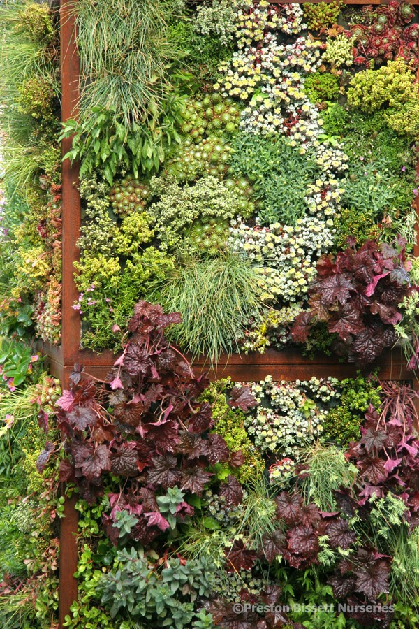 Sedum Wall for bees