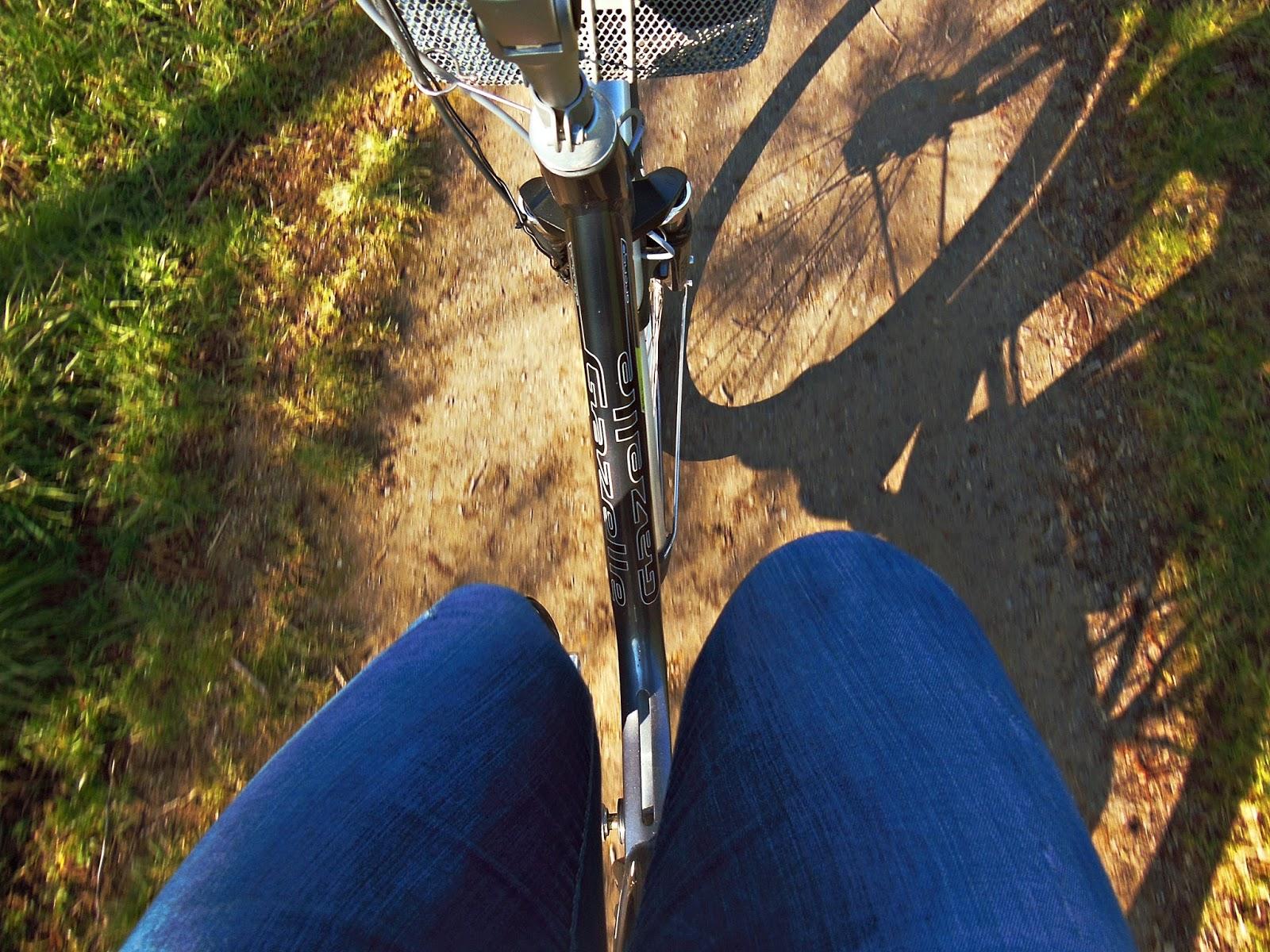 Rower, Holandia, wycieczka rowerowa
