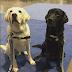 Θεραπευτικοί σκύλοι στο Λας Βέγκας...