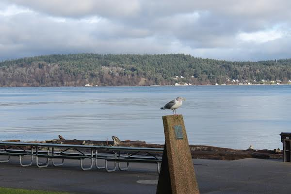 Seagull Resting Near Puget Sound, Tacoma, Washington
