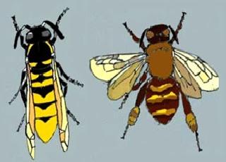 Le api e i fuchi dinanzi al tribunale della vespa (Esopo)