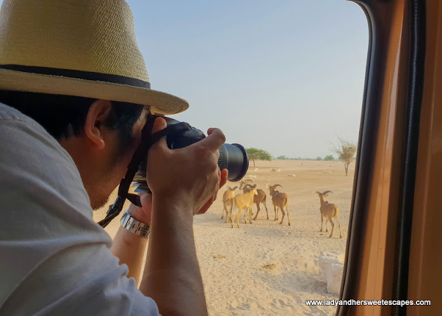 Ed in Sir Bani Yas Island