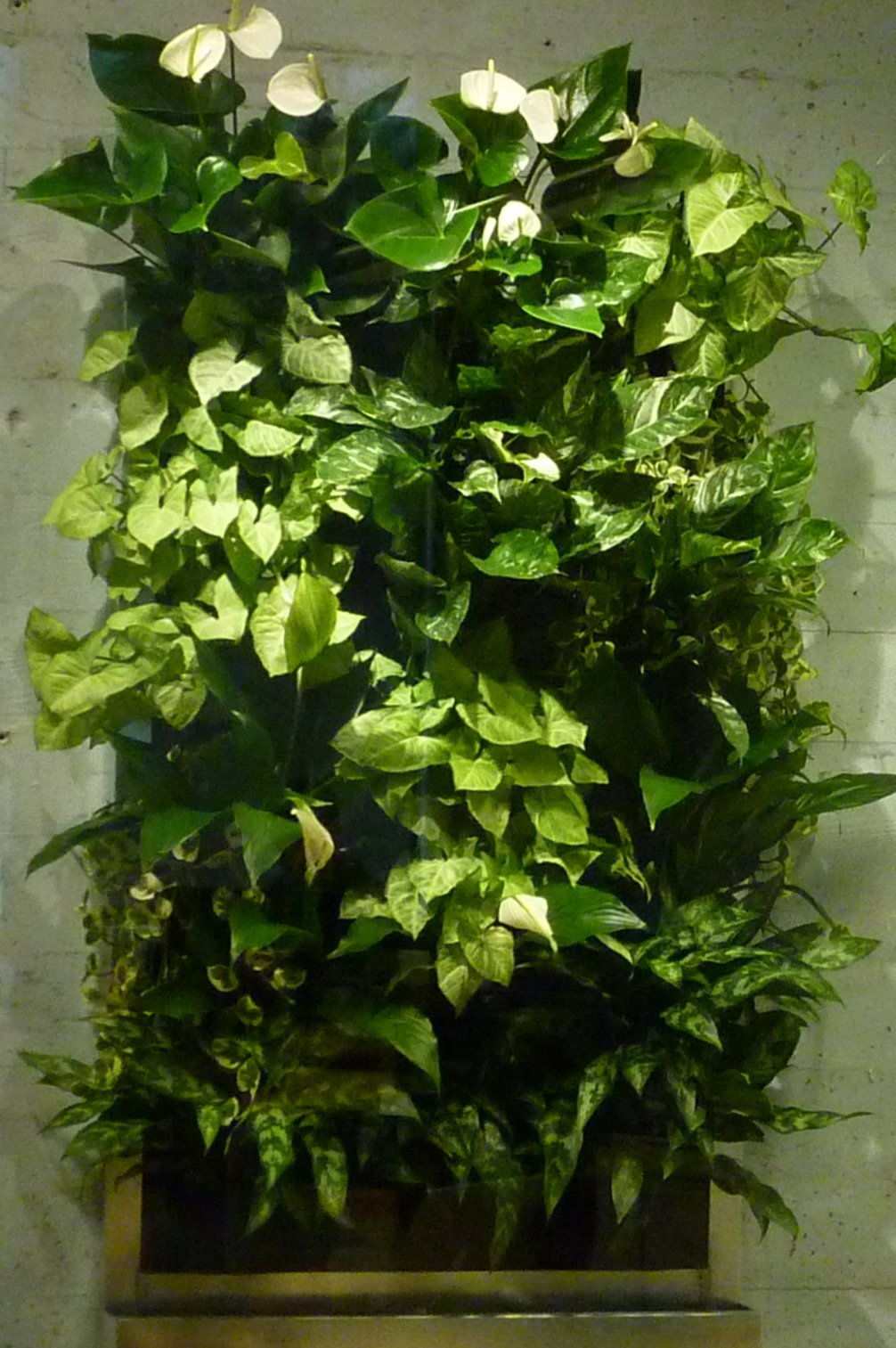 Plants On Walls Vertical Garden Systems Living Wall For