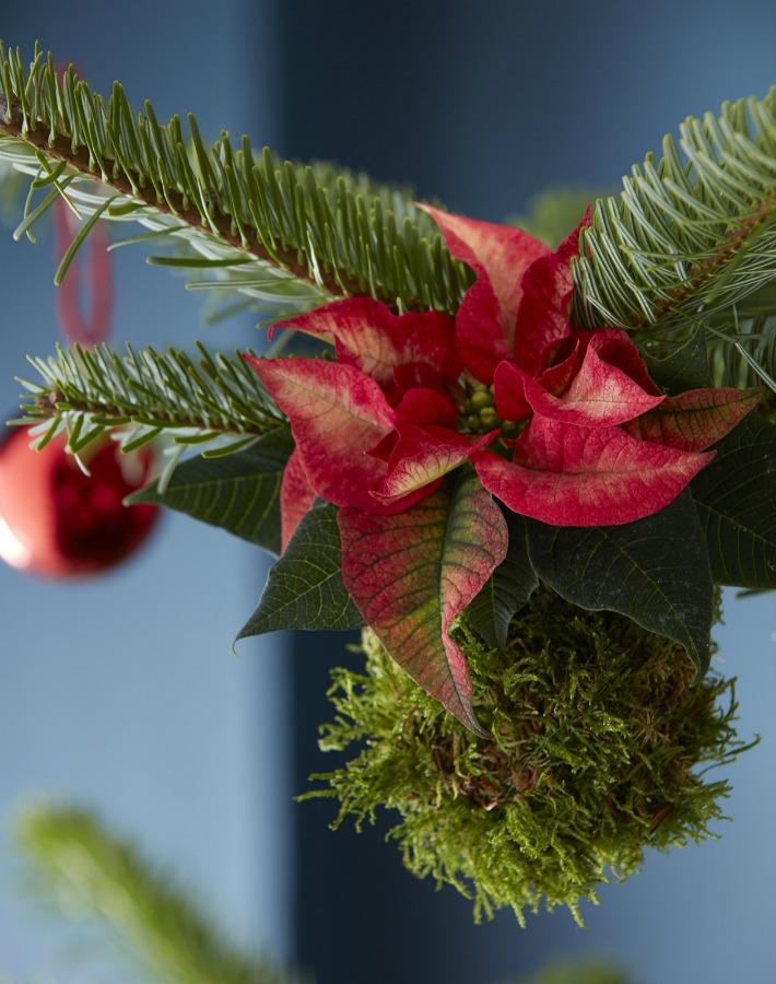 Kokedamas de poisenttias para Navidad