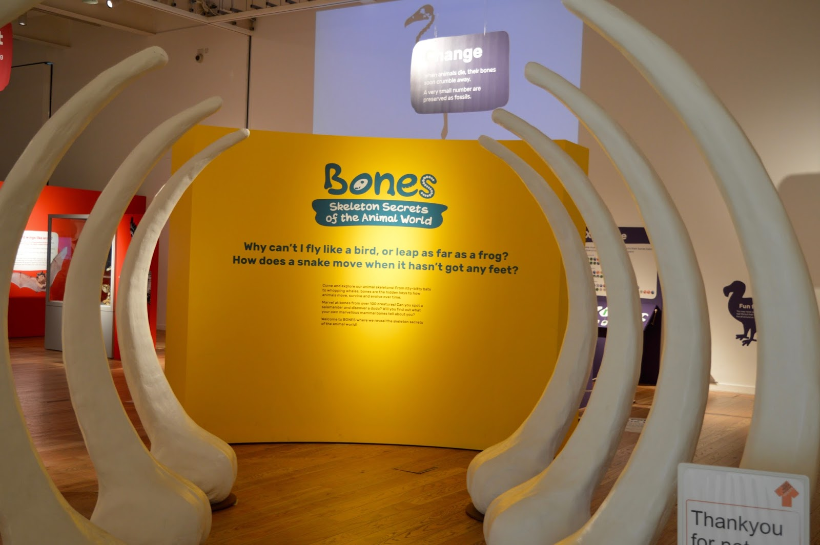 Bones Exhibition at Hancock Museum, Newcastle | whale ribs